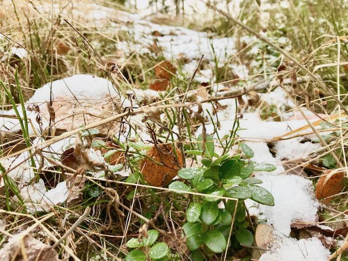 utsikt från en kisspaus, löpning, Malin Lundskog