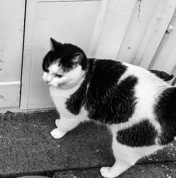 katt, fira, umgås, Hälsa mera, Malin Lundskog