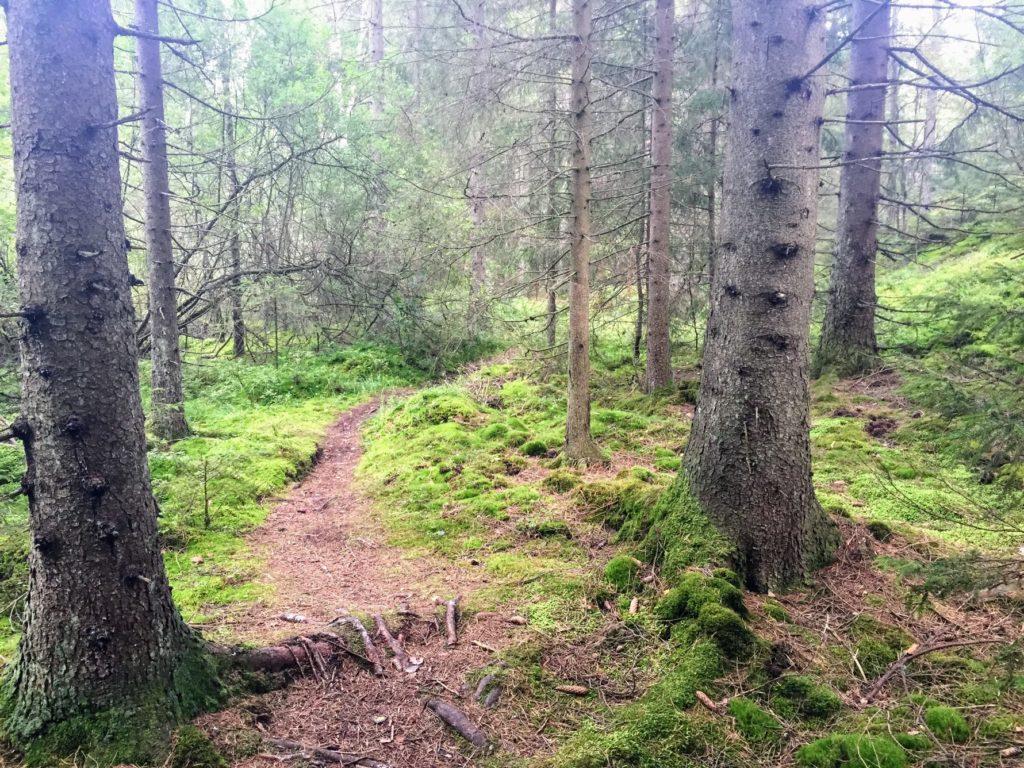 guide till skogsbad, björkar, utomhus, dagsljus