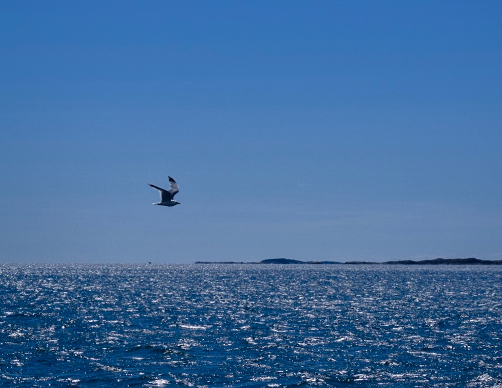hav, fiskmås, entreprenör, Malin Lundskog