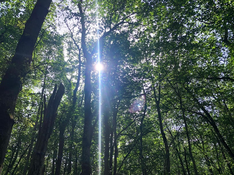 vandring i vacker natur, skogsbad, Kinnekulle, Malin Lundskog