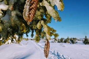 skidspår, naturen, vinter, snö, Sälen, hälsa, må bra, utonjut