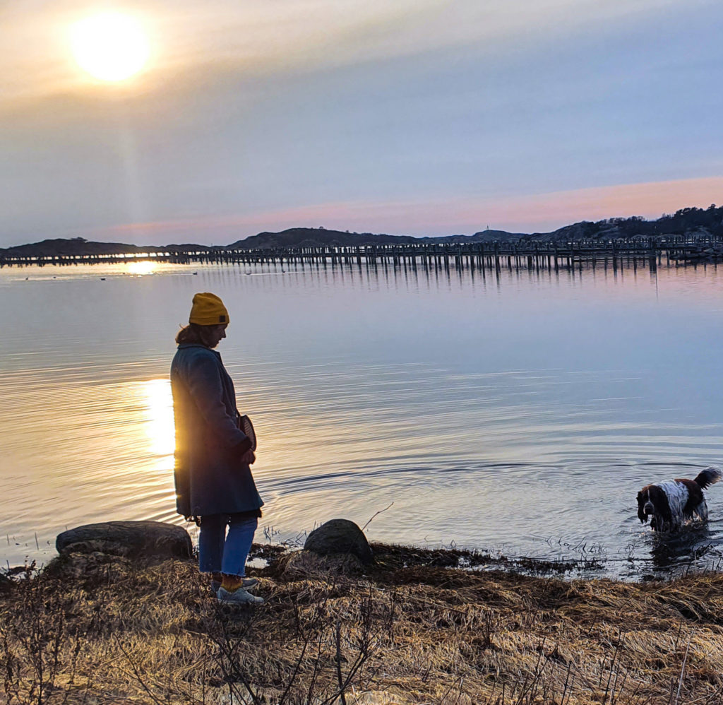 havet, hund, Malin Lundskog, Göteborg, springer spaniel