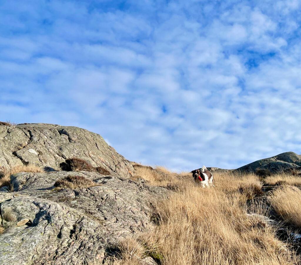 behöver vi en runstreak för att bli löpare, springa med hund, Malin Lundskog